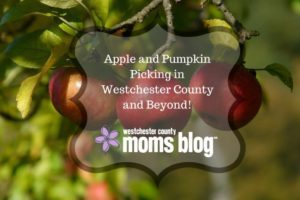 Westchester apple and pumpkin picking