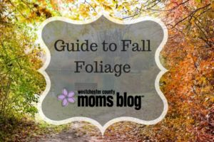 guide-to-fall-foliage