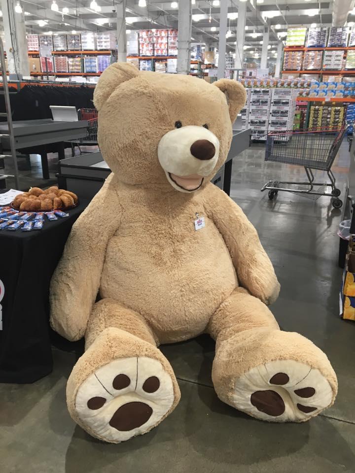Teddy, standing guard.