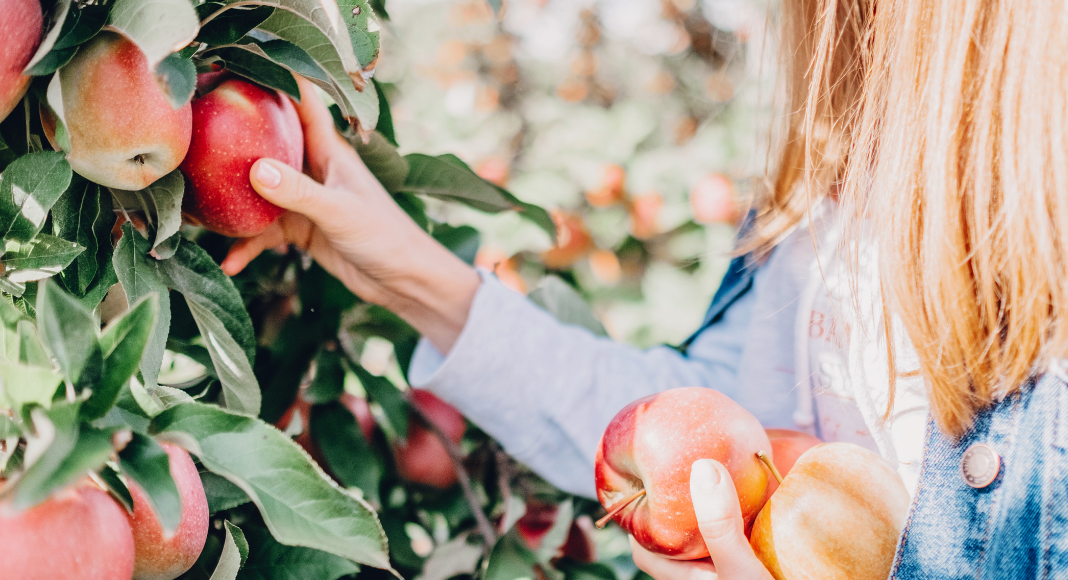 apple & pumpkin picking