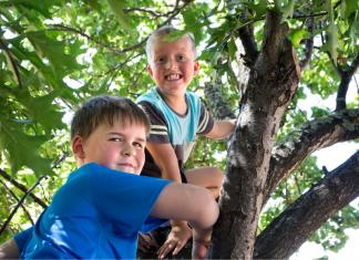 climb trees