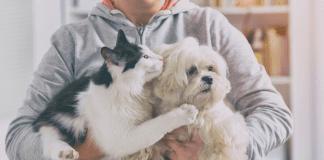 love of pets
